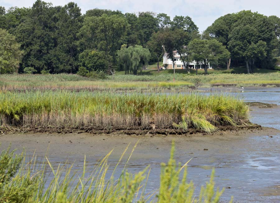 wetlands surveys by Long Island land surveyors.